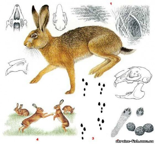 cottontail trail