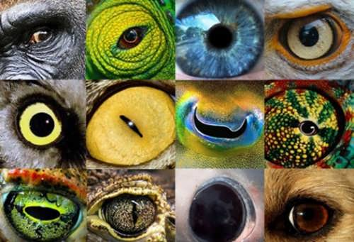 Can animals see colours