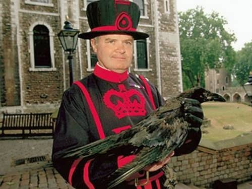 Beefeater with the raven