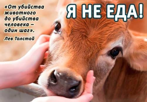 do not eat animals