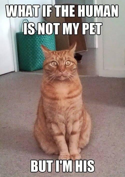 Am I a pet?