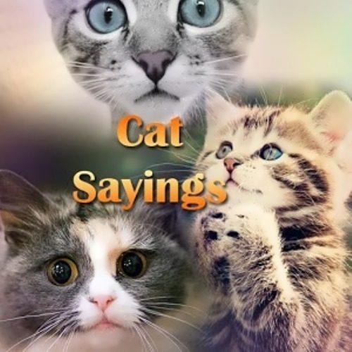 Cat sayings